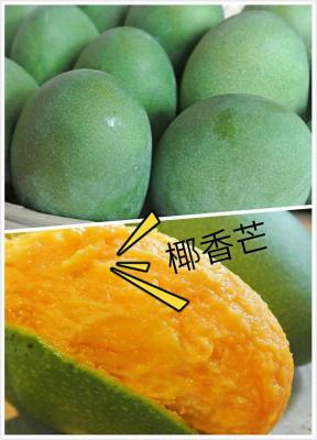 开心佬  椰香芒果(精品礼盒装)  新鲜水果  绿色无机