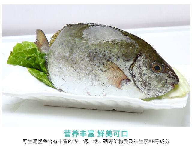野生泥猛鱼