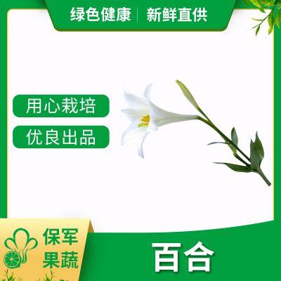 蔬菜种植基地批发百合(四头)特色蔬菜 有机蔬菜
