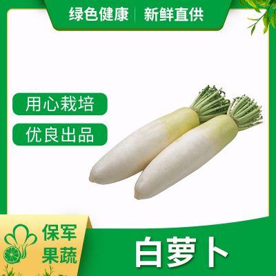 生产基地批发白萝卜 蔬菜配送 特色蔬菜